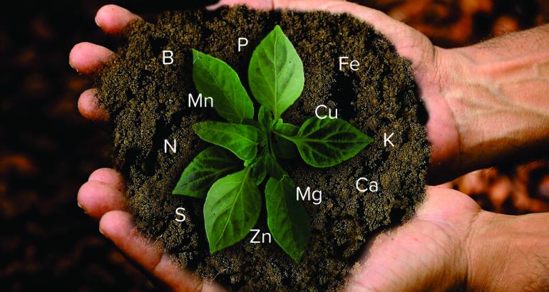 Come riconoscere le carenze nutrizionali delle vostre coltivazioni