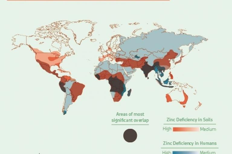 Deficiencia de zinc en el mundo