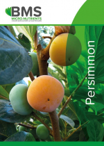 Technical information Persimmon